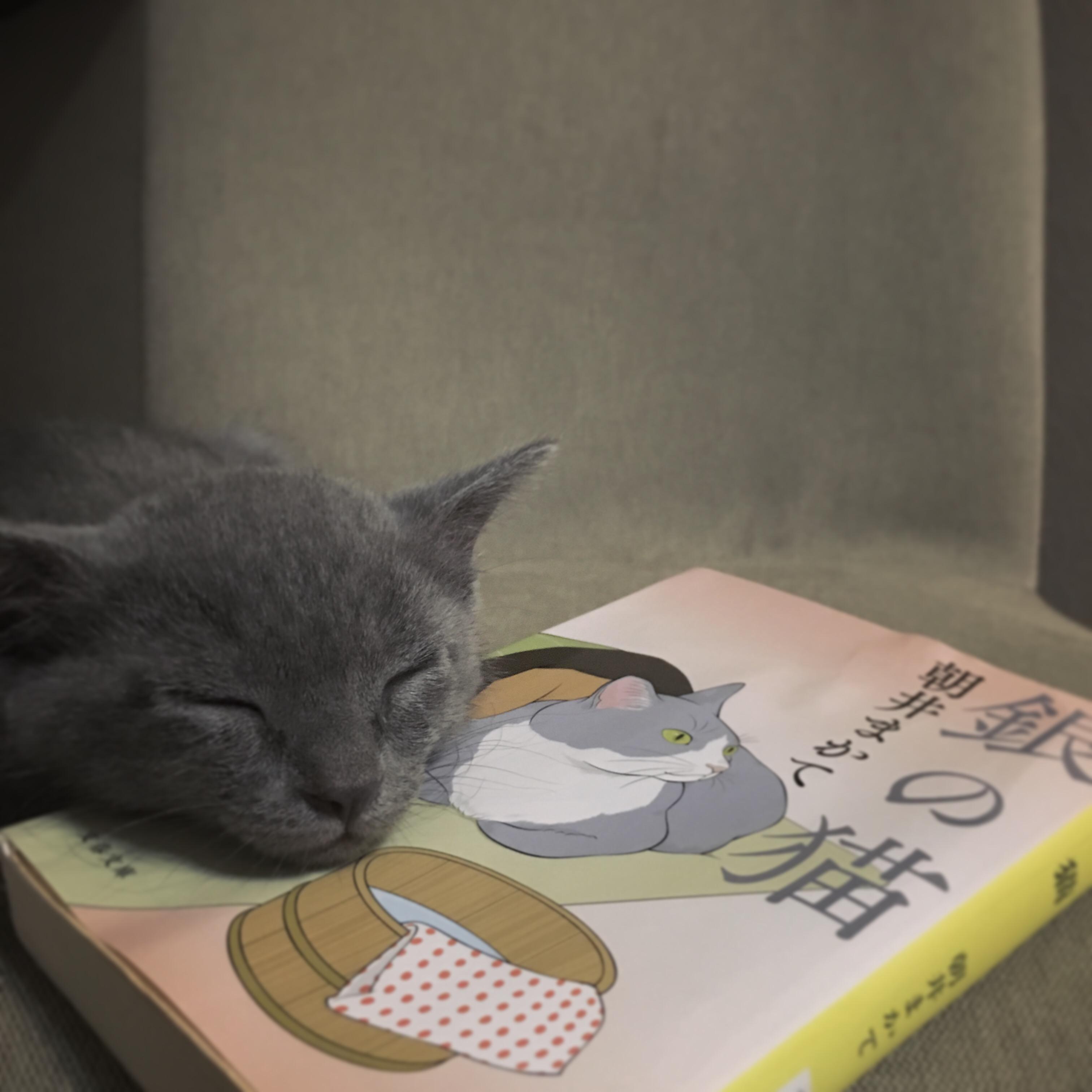 『銀の猫』朝井まかて 文春文庫