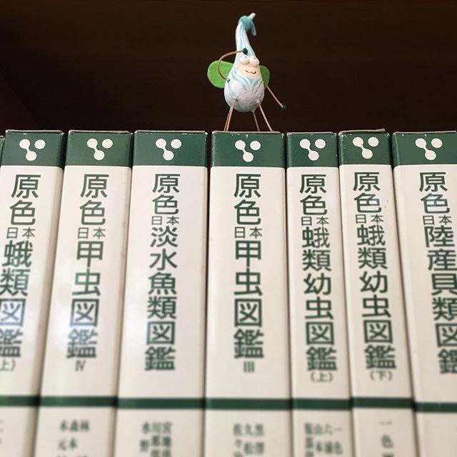 アンデルセン公園の本棚#book #books #instabooks #booklovers #bookworms #readingbugs #本 #本の虫 #読書倶楽部 #活字中毒 #読書 #アンデルセン #アンデルセン公園 #本棚 #図書室 #図鑑